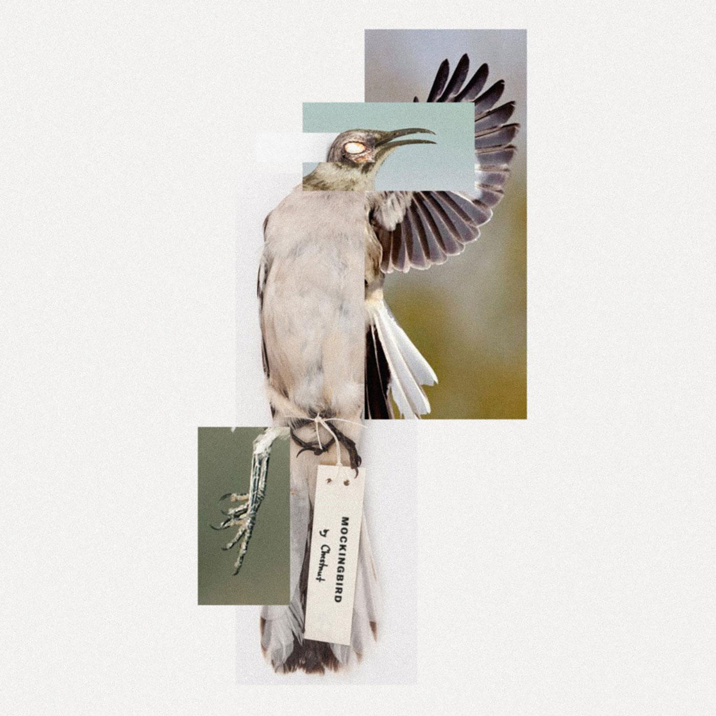 Chestnut - Mockingbird